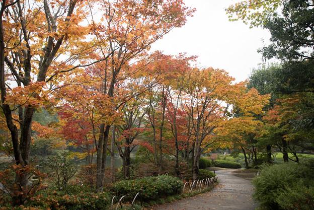 【昭和記念公園:日本庭園】1