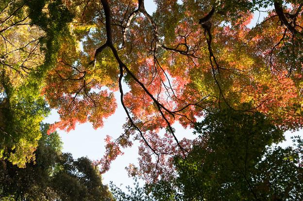 【新宿御苑(モミジ山)】4
