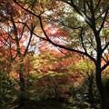 写真: IMG_7730宝筐院・いろは紅葉