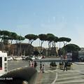 写真: ローマの松2014年10月31日_PA310181