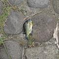 写真: 餌釣師の帰った後に