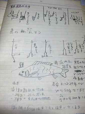 つりノート2  鯉