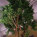 ツインリーブスホテル出雲 室内の樹木
