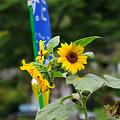 Photos: 20100811_093558