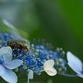 花粉大好き♪