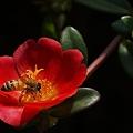 花粉いっぱい!