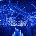 青の洞窟 2014
