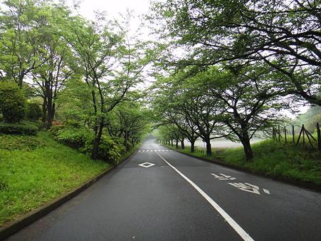110512 野津田公園