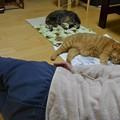 Photos: ねこもじ「三」