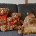 「4匹の子熊」の物語