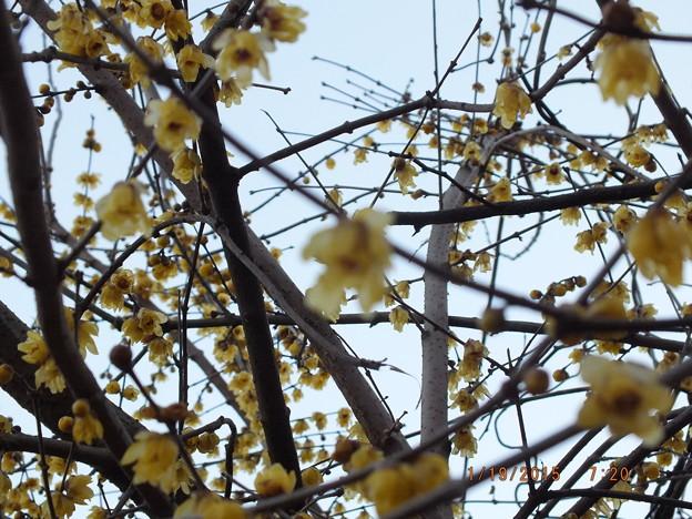 大木に沢山の花が咲いていましたが