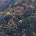 写真: 大原の紅葉