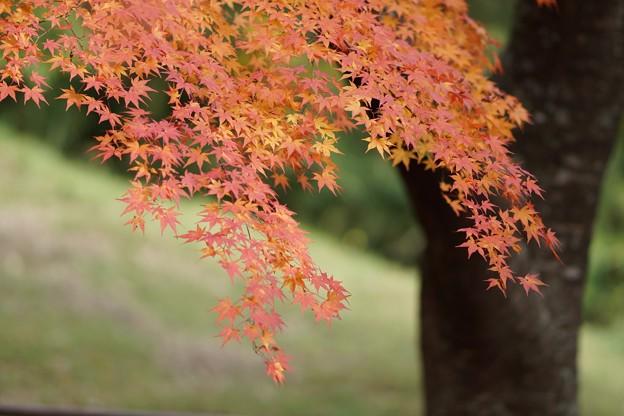 紅葉まつり01