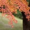 写真: 紅葉まつり01