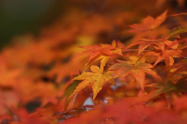 紅葉まつり03