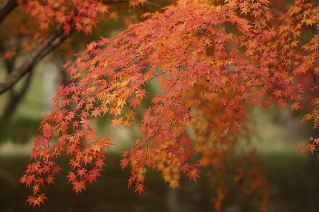 紅葉まつり04