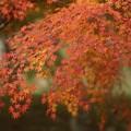 写真: 紅葉まつり04