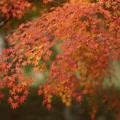 Photos: 紅葉まつり04
