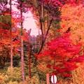 定勝禅寺に秋が訪れ滝のように紅葉が流れる