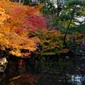 Photos: 都   錦     池