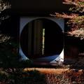逆から眺めし明月院の窓