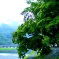 嵐山の緑もみじ