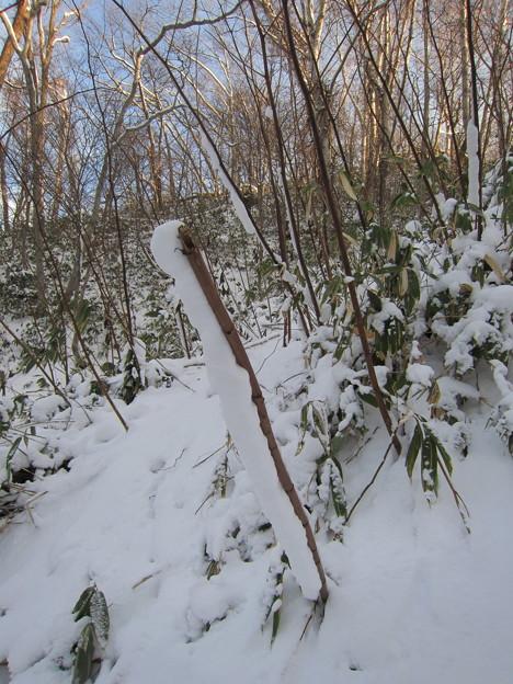 棒にくっつく雪