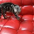 Photos: 仔猫怒る。02