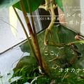 Photos: メダカが猫草を
