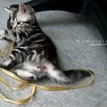 Photos: 実は猫も