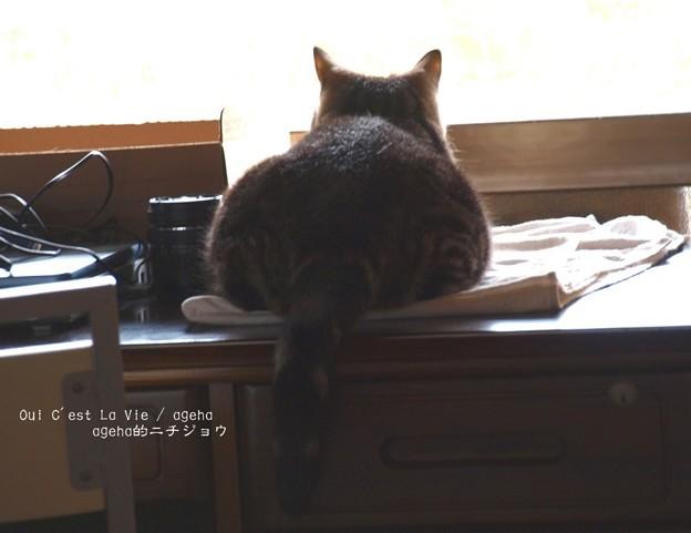 Photos: 猫まんじゅう。(尻コレ。)