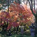 川越 喜多院の紅葉 21