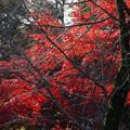 川越 喜多院の紅葉 30