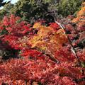 川越 喜多院の紅葉 31