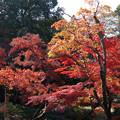 川越 喜多院の紅葉 32