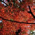 川越 喜多院の紅葉 36
