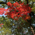川越 喜多院の紅葉 37