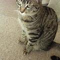 写真: 本日は猫日和でした。