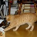 写真: 2008年11月01日の茶トラのボクチン(4歳)