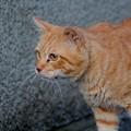 写真: 2011年11月07日のボクチン(7歳)