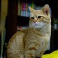 写真: 2008年12月01日のボクチン(4歳)