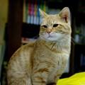 Photos: 2008年12月01日のボクチン(4歳)