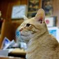 写真: 2008年12月05日の茶トラのボクちん(4歳)