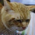 Photos: 2010年12月25日の茶トラのボクちん(6歳)