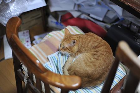 2010年12月27日の茶トラのボクちん(6歳)