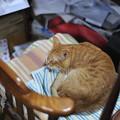 写真: 2010年12月27日の茶トラのボクちん(6歳)