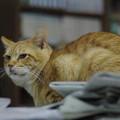 写真: 2011年01月04日の茶トラのボクちん(6歳)