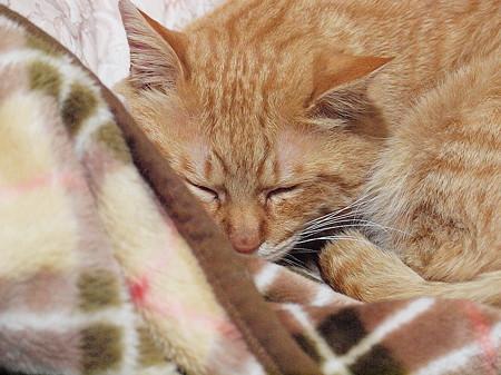 2009年02月14日の茶トラのボクチン(4歳)