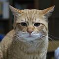 写真: 2009年02月26日の茶トラのボクチン(4歳)