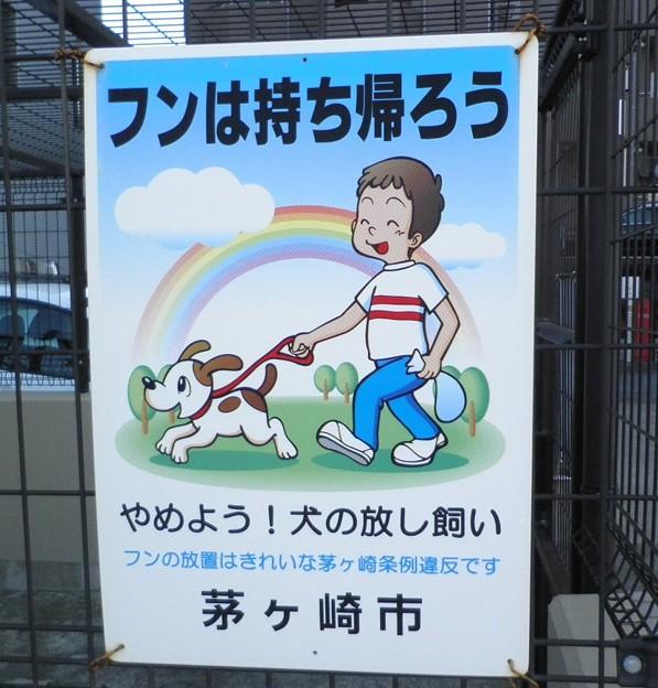犬糞~茅ヶ崎市